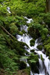 Brad Booth - Wahkeena Falls