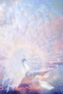 Stone Branch Images - Caspar Shining or Melek Taus