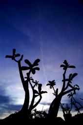 Widodo Andhi - Silhouette on Twilight