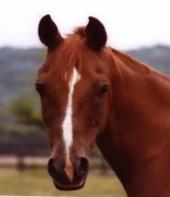 Rebecca Ruadh - Mahogany, my horse