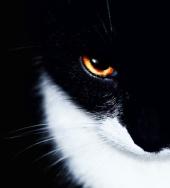 Dick Hefmen - Black Cat
