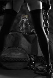 Andrew Yeadon - Owl Series